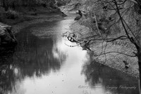 Hickory Creek Black and White